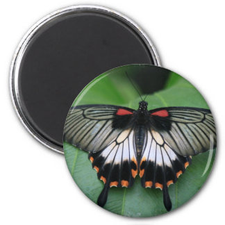Black and Pink Swallowtail Butterfly Magnet Magnets