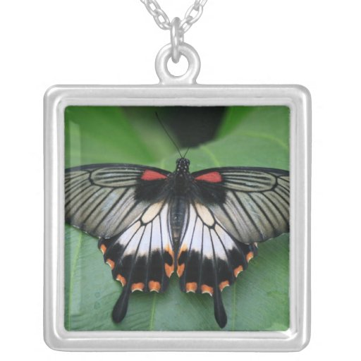 Black and Pink Swallowtail Butterfly Necklace