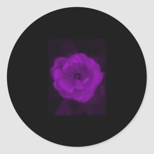 Black and Purple Rose. Round Stickers