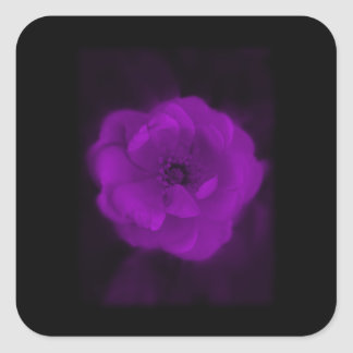 Black and Purple Rose. Square Stickers
