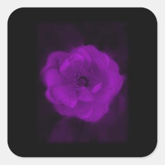 Black and Purple Rose. Square Sticker