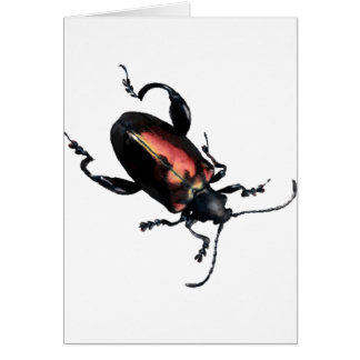 Black and Red Beetle bug Greeting Card