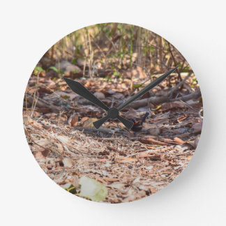 BLACK AND RED FINCH IN RURAL QUEENSLAND AUSTRALIA WALL CLOCKS
