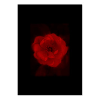 Black and Red Rose. Business Card Templates