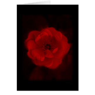 Black and Red Rose. Card