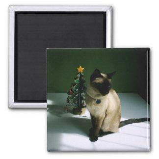 Black And Skin Cat Diesel At Xmas Magnets