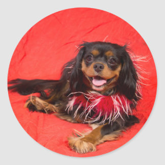 Black And Tan Cavalier King Charles In Red Sticker
