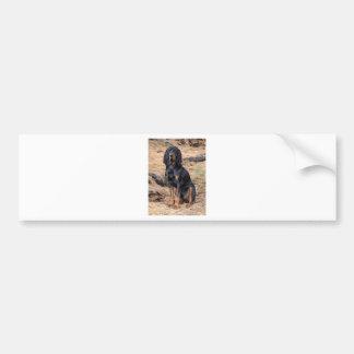 Black and Tan Coonhound Dog Bumper Sticker