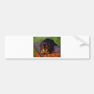 Black And Tan Coonhound Puppy Bumper Sticker