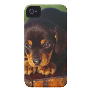 Black And Tan Coonhound Puppy iPhone 4 Covers