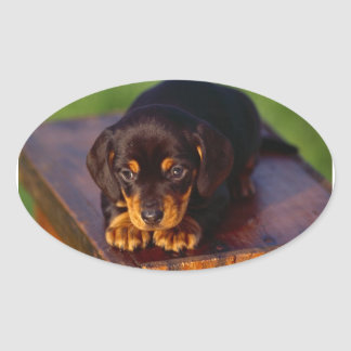 Black And Tan Coonhound Puppy Oval Sticker