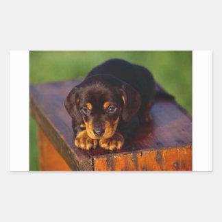 Black And Tan Coonhound Puppy Rectangular Sticker