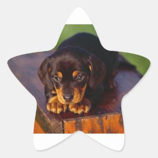 Black And Tan Coonhound Puppy Star Sticker