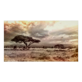 Black and White Acacia on the African Savanna Poster