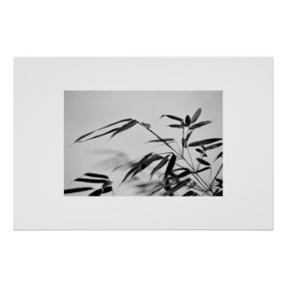 black and white bamboo foliage poster