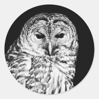 Black and White Barred Owl Portrait Classic Round Sticker