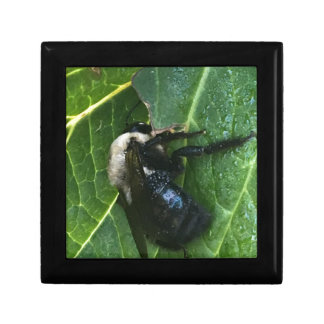 Black And White Bee Small Square Gift Box