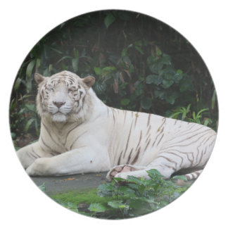 Black and White Bengal Tiger relaxed and smiling Dinner Plates