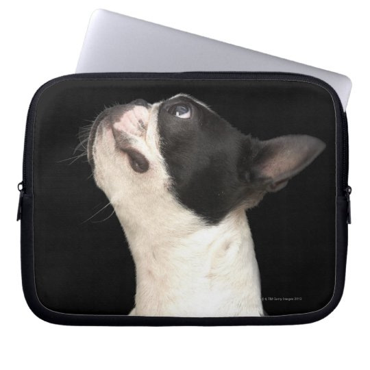 Black and white Boston Terrier looking up Laptop Sleeve