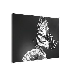 Black and White Butterfly Canvas Stretched Canvas Print