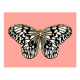 Black and white butterfly,coral pink background postcard