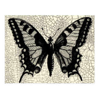 Black and White Butterfly on Cracked Background Postcard
