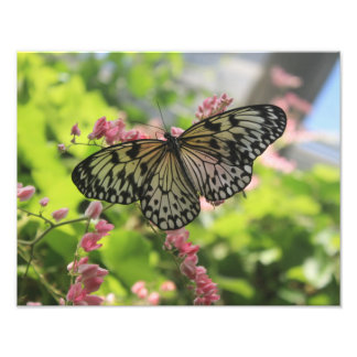 Black And White Butterfly On Pink Flower Photo Print