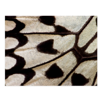Black and white butterfly wing postcard