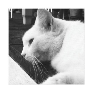 Black and White Cat Canvas Prints