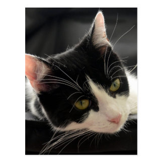 Black and White Cat Face Photo Postcard