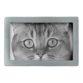 Black and white cat looking straight at you belt buckles