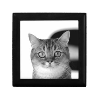 Black and white cat looking straight at you gift box