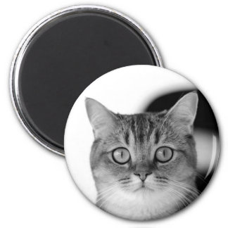 Black and white cat looking straight at you magnet