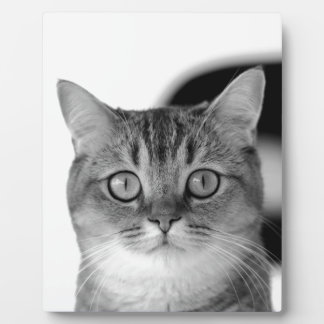 Black and white cat looking straight at you plaque