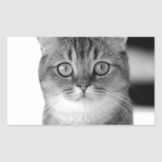 Black and white cat looking straight at you rectangular sticker