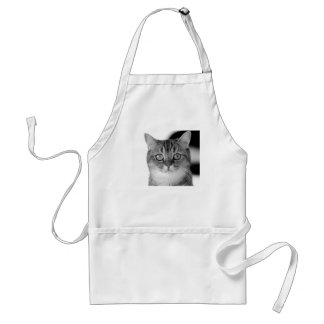 Black and white cat looking straight at you standard apron