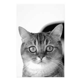 Black and white cat looking straight at you stationery