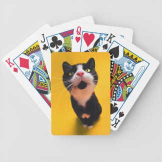 Black and white cat-tuxedo cat-pet kitten-pet cat bicycle playing cards