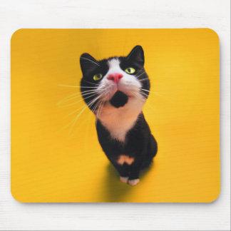 Black and white cat-tuxedo cat-pet kitten-pet cat mouse pad