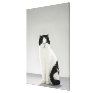 Black and white cat with glowing green eyes gallery wrapped canvas