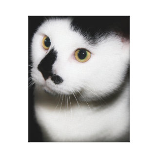BLACK AND WHITE CAT WRAPPED CANVAS STRETCHED CANVAS PRINT
