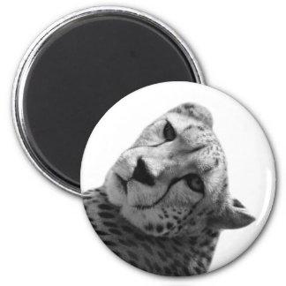 Black and white cheetah animal wild  jungle photo magnet