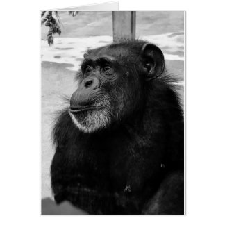 Black and White Chimpanzee Monkey Photo - Blank Card