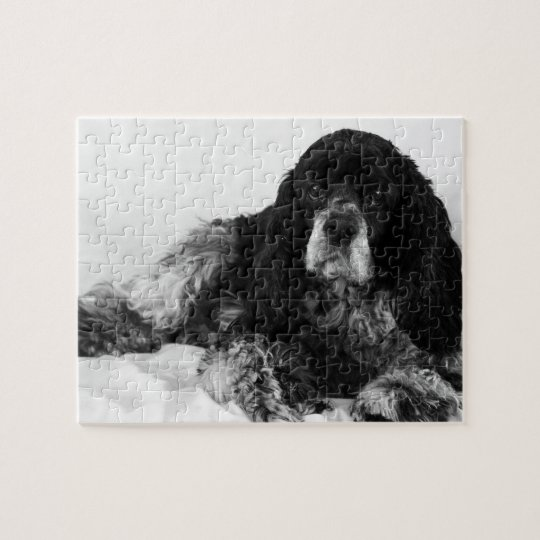 Black and White Cocker Spaniel Photo Jigsaw Puzzle