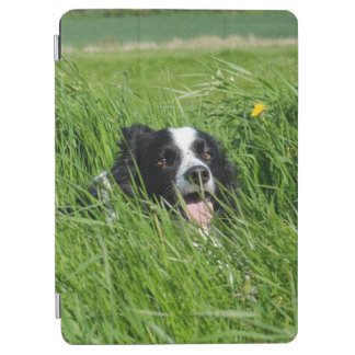 Black and White Collie in Grass iPad Air Cover