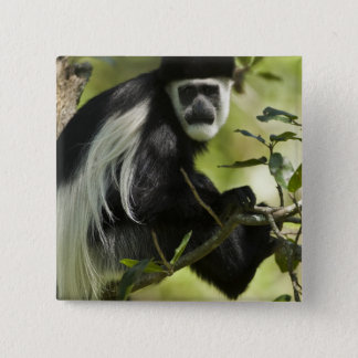 Black and White Colobus Monkey, Colobus 2 15 Cm Square Badge
