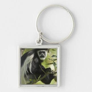 Black and White Colobus Monkey, Colobus 2 Key Chains