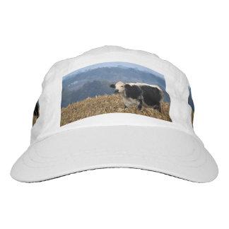 Black and White Cow grazes in freshly plowed field Hat