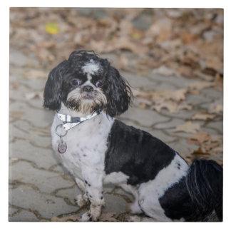 Black and white dog ceramic tile