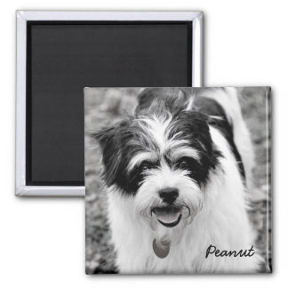 Black and White Dog Photography 1 Magnet
